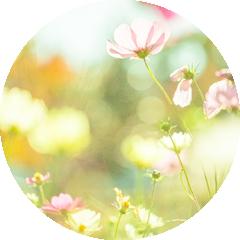 身近な蜜源植物
