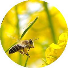 蜜源お花カレンダー